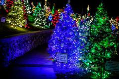 Christmas River Walk