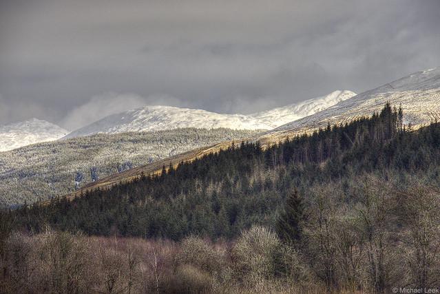 The Argyll Forest; by Strachur, Argyll, Scotland