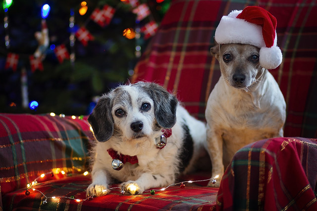 12/12 Pokey & Darla Almost Ready for Christmas