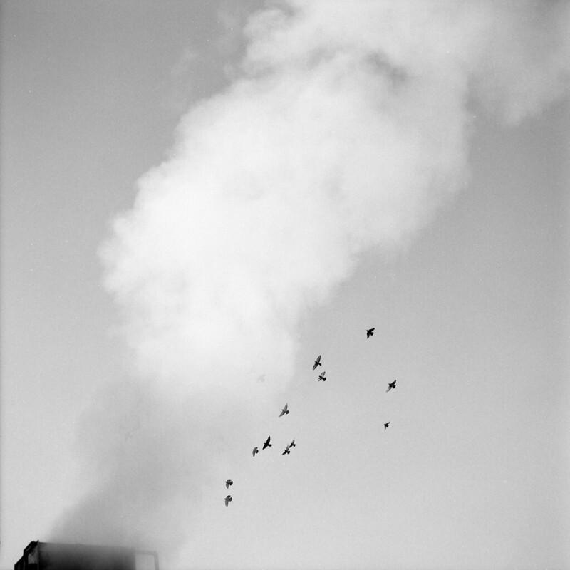 Bird steam