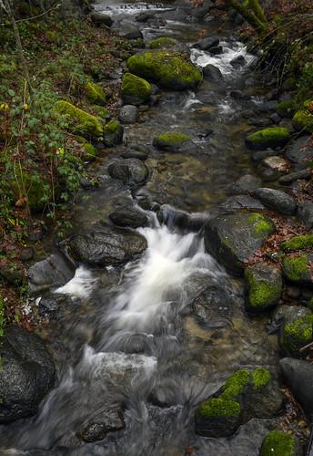 ashland creek lithia park al case landscape oregon nikon z 50 z50 nikkor 1650mm handheld slow shutter vr