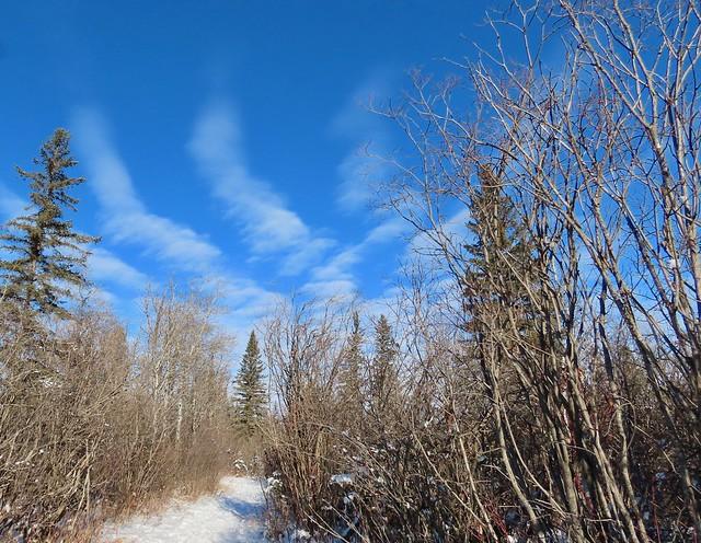 Weaselhead Natural Area clouds