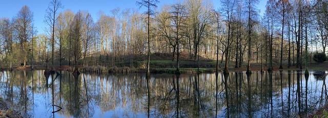 Sumpfzypressen im Rombergpark