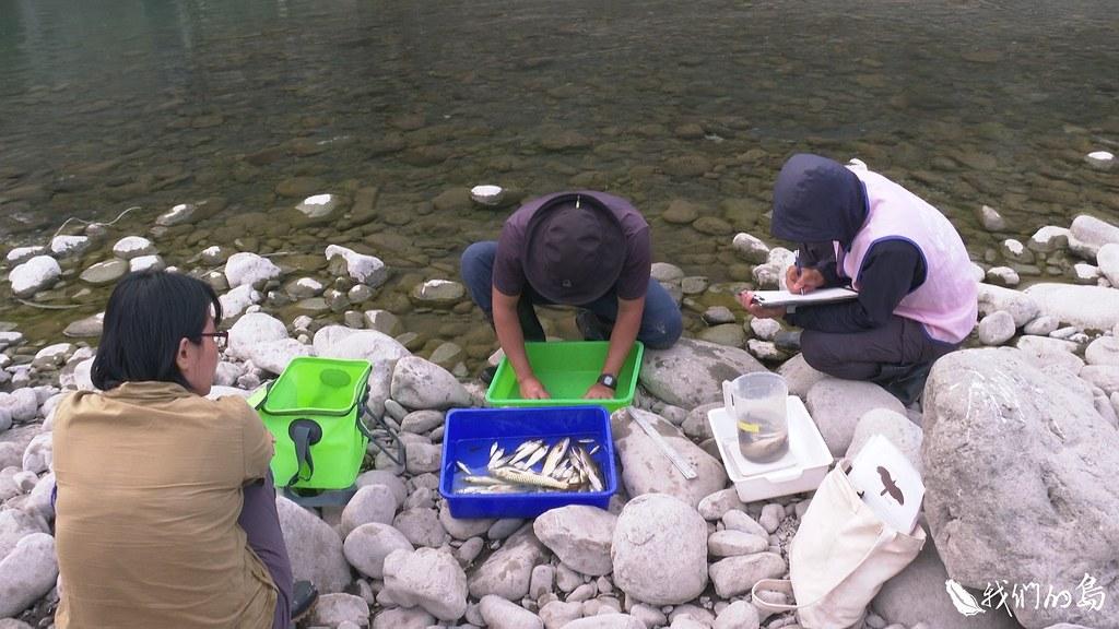 清華大學生物資訊與結構生物研究所研究團隊進行溪流魚類調查。