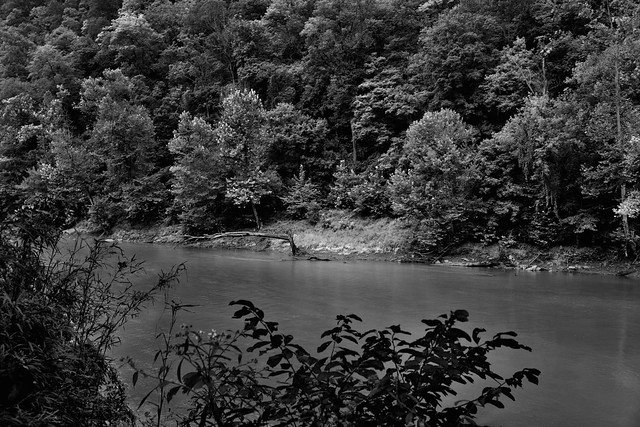 Green River and a Forest of Trees (Black & White, Mammoth Cave National Park)