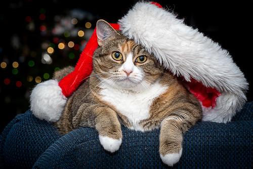 Meowy Christmas!