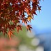 Colored leaves in the Imperial Palace 2019/11 No.3.
