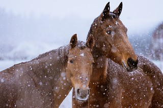 Friends in the snow