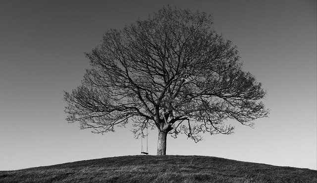 Lonely Tree, Burrow Hill, Somerset