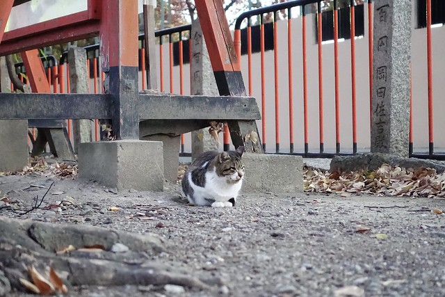 Today's Cat@2019-12-16