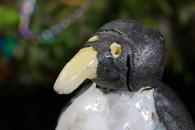 Penguin son
