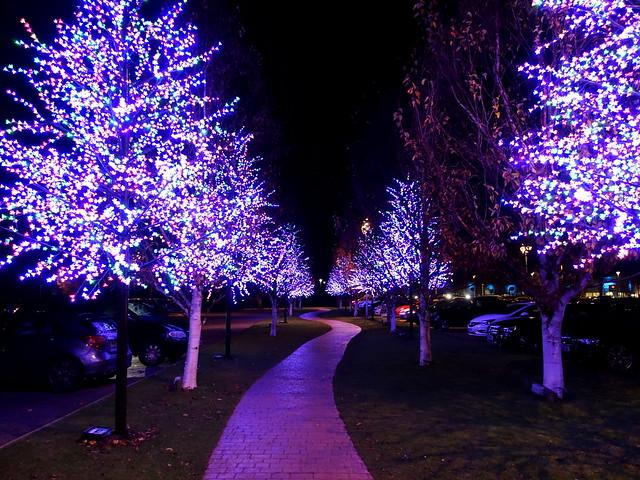Festive tree walkway at the Christmas display at Barton Grange Garden Centre near Preston
