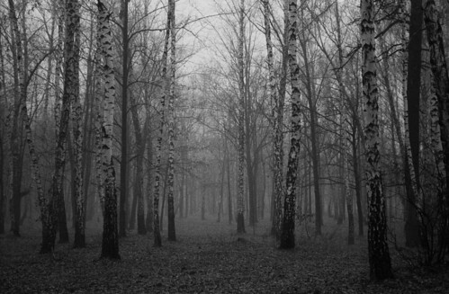Мрачный лес / Dark forest | by spoilt.exile