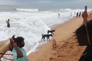Waves, Mahabalipuram 2019