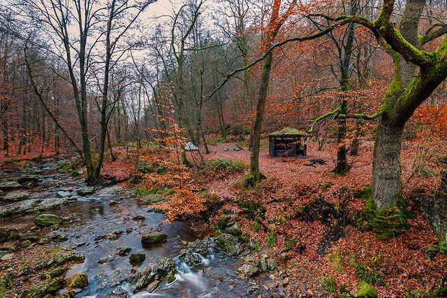Bivouacing @ the Belgian forests