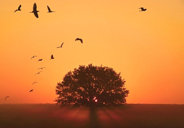 sunrise fly over... my morning walk