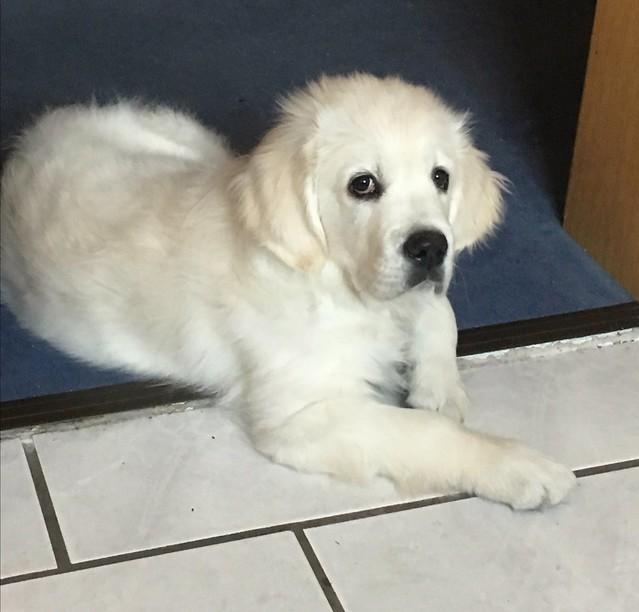 Connor 11 Wochen alt