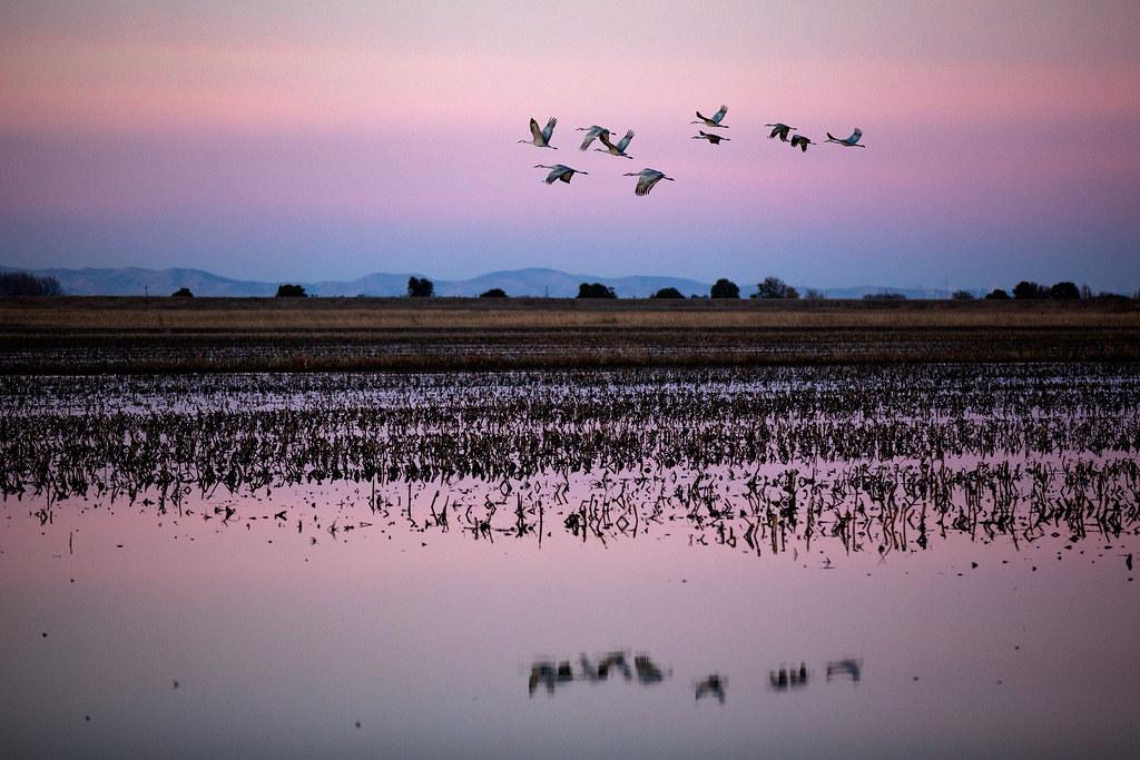 Making a Crane Marsh