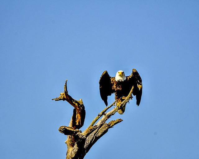 Eagle-6062