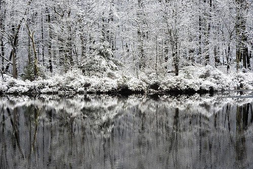 Winter White Reflection