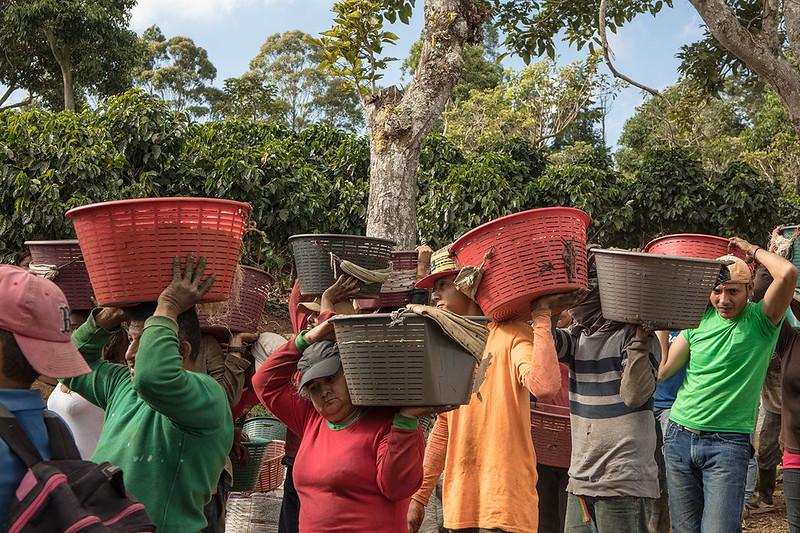Nguồn gốc của cà phê thương mại bình đẳng - Fair Trade Coffee (3)