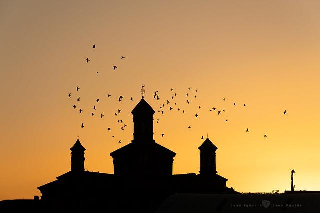 Moyuela - Gallos y palomas