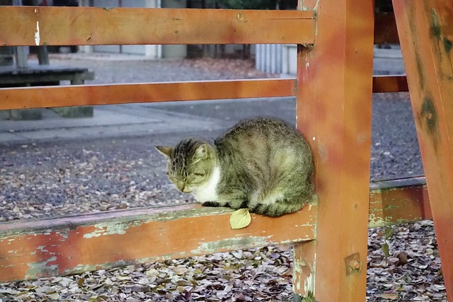 Today's Cat@2019-12-17