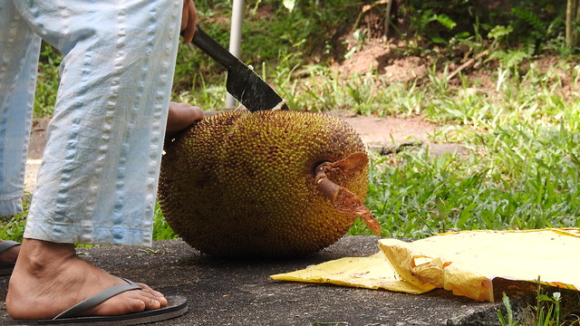 Cutting a Jackfruit