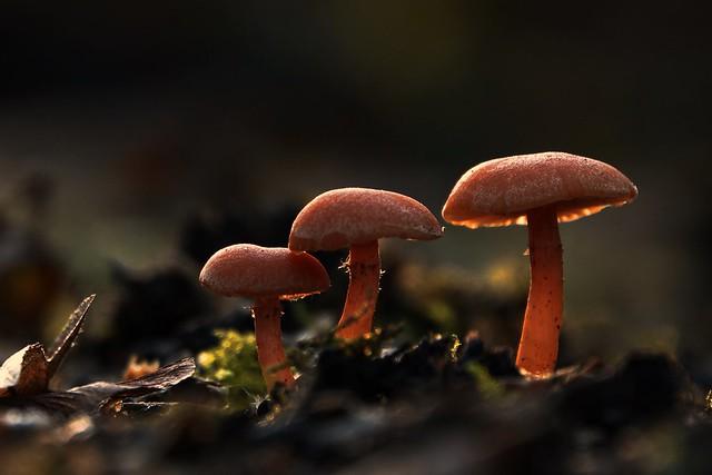 mushroom family in the last evening light