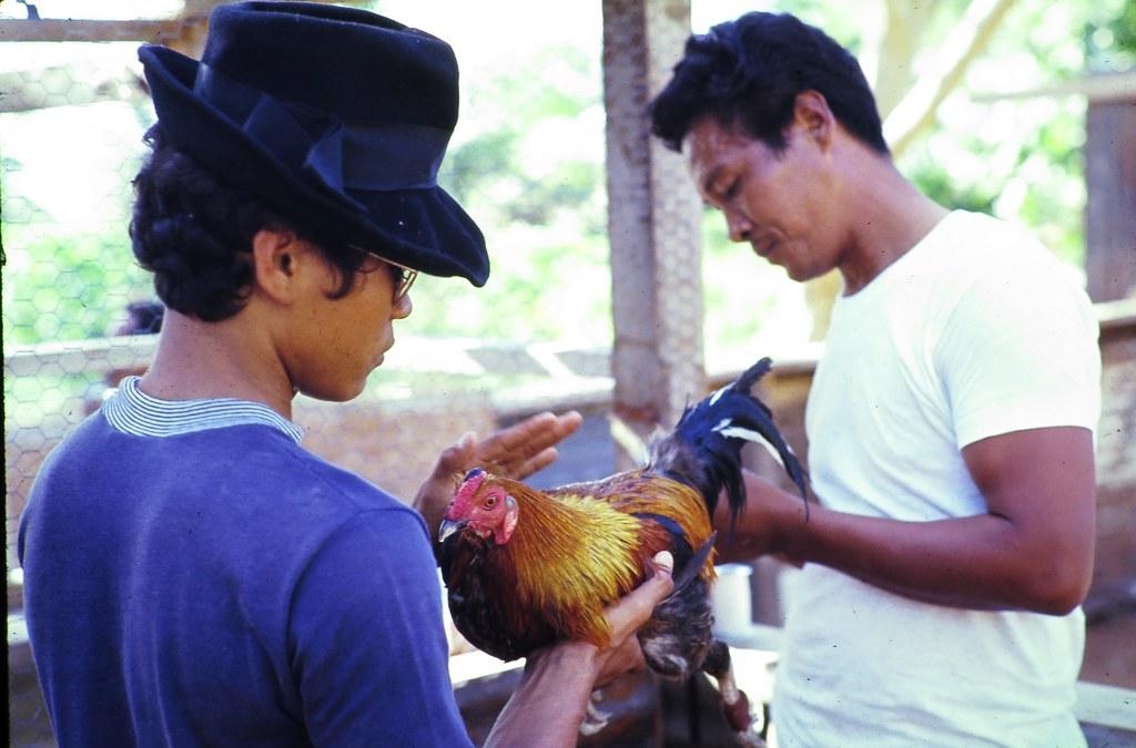 Peace Corps - Cock Fights (#004) [Robert Bartolotta's Content]