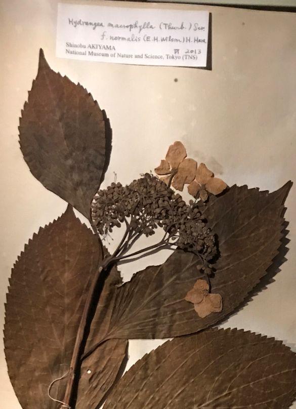 IMG_2186JapanmuseumSieboldhuisHerbariumDetail