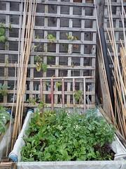 My Garden 19-11-23 (2)