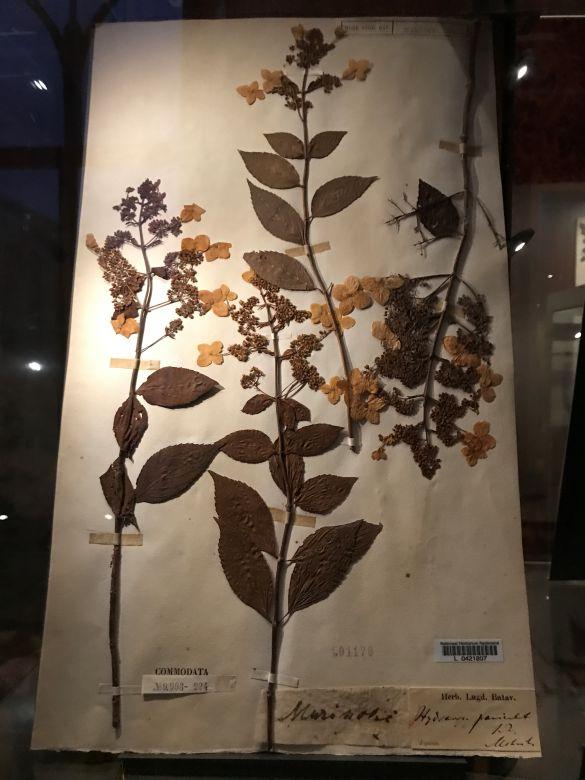 IMG_2187JapanmuseumSieboldhuisHerbarium