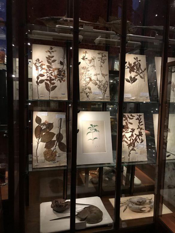 IMG_2185JapanmuseumSieboldhuisMooieOpstelling