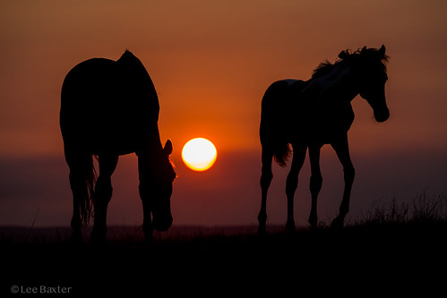 wilton horse sunset maldon bushfire sun orange wollindillyshire picton