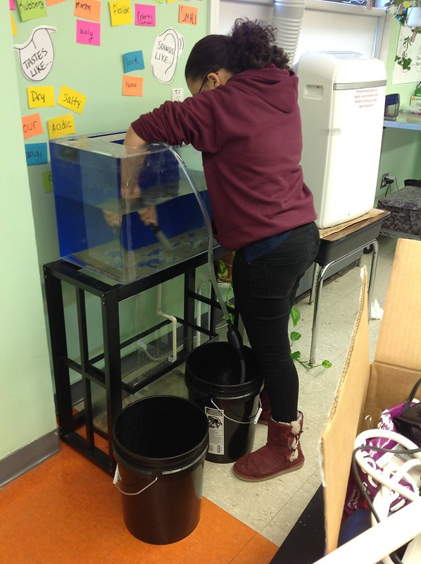 Aquarium-Building at The Learning Community Charter School
