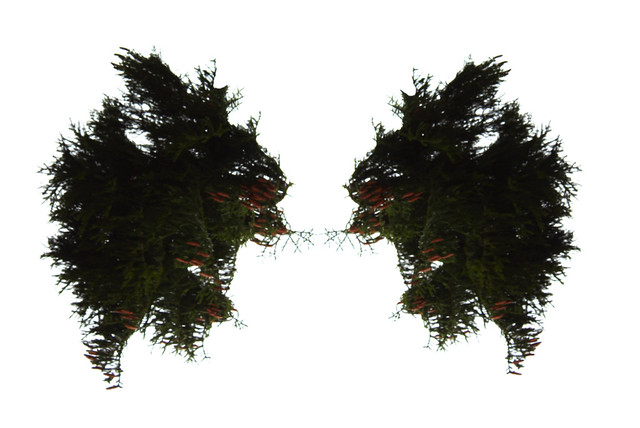 trees or rabbit?