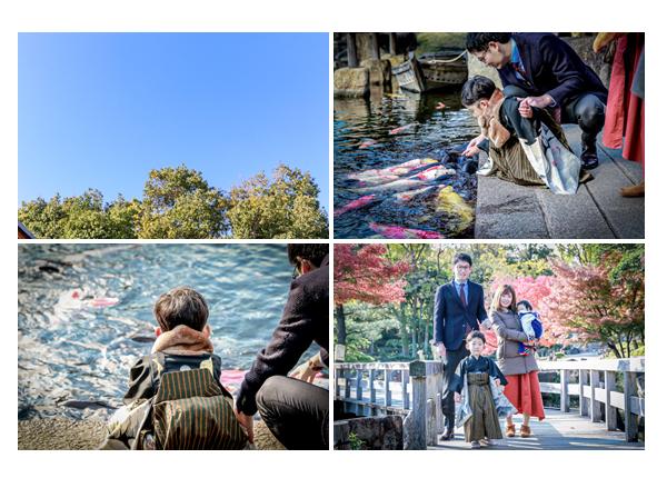 徳川園 池の錦鯉 七五三のロケーション撮影
