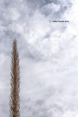 Cactus K75_0407IN