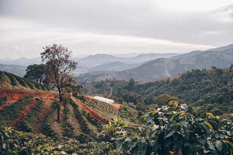 Nguồn gốc của cà phê thương mại bình đẳng - PrimeCoffee