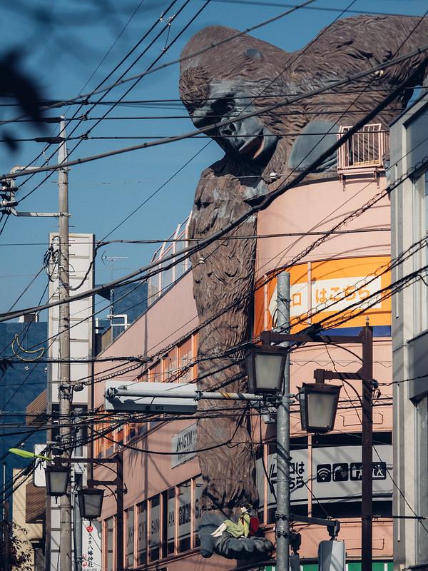大猩猩|TOKYO