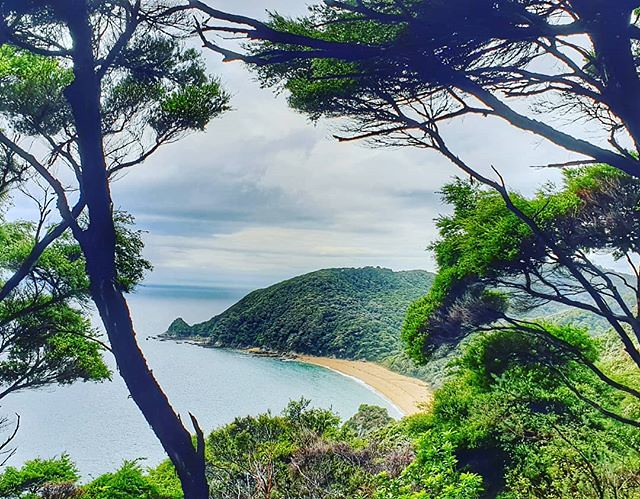 Looking down to Anapai Bay on our way to Mutton Cove #upandover #abeltasmannationalpark #decemberadventure #day2