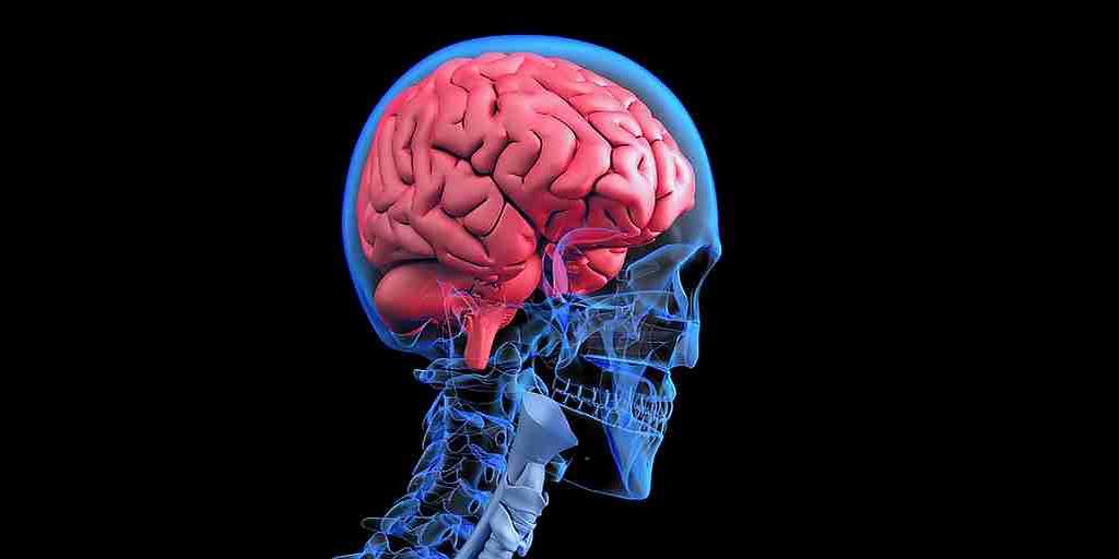 Briser les barrières cérébrales pour attaquer les tumeurs cancéreuses