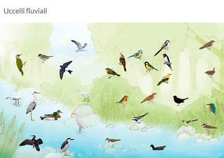 uccelli canori e molto altro