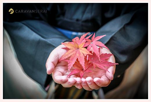 七五三 男の子の手 モミジの葉