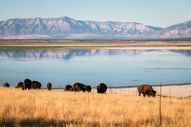 Antelope Island, viewing Great Salt Lake and Utah mountain ranges
