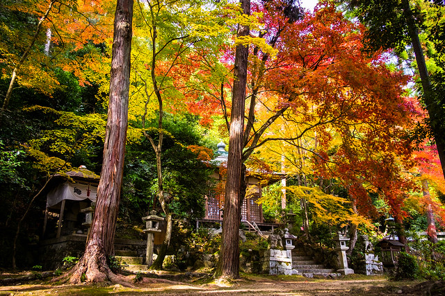 reminiscences of autumn leaves #2 (Sagano, Kyoto)