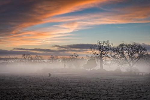 mist horse trees sunrise fog surrey england treesinmist