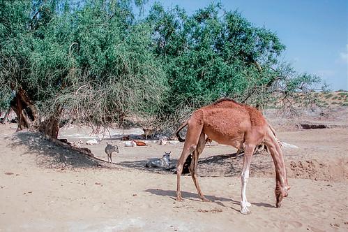 Rajasthan (11 of 46).jpg