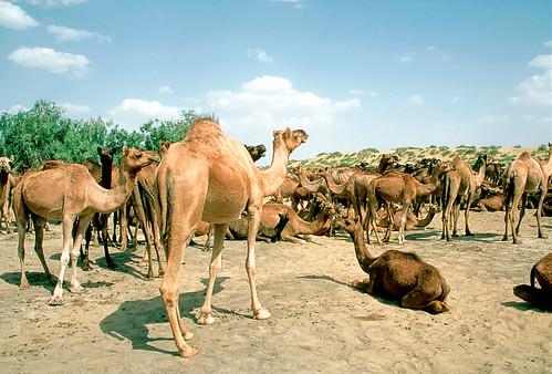 Rajasthan (13 of 46).jpg